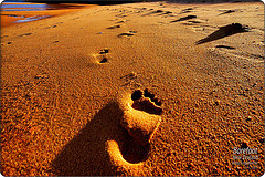 Barefoot - Footprints in the sand